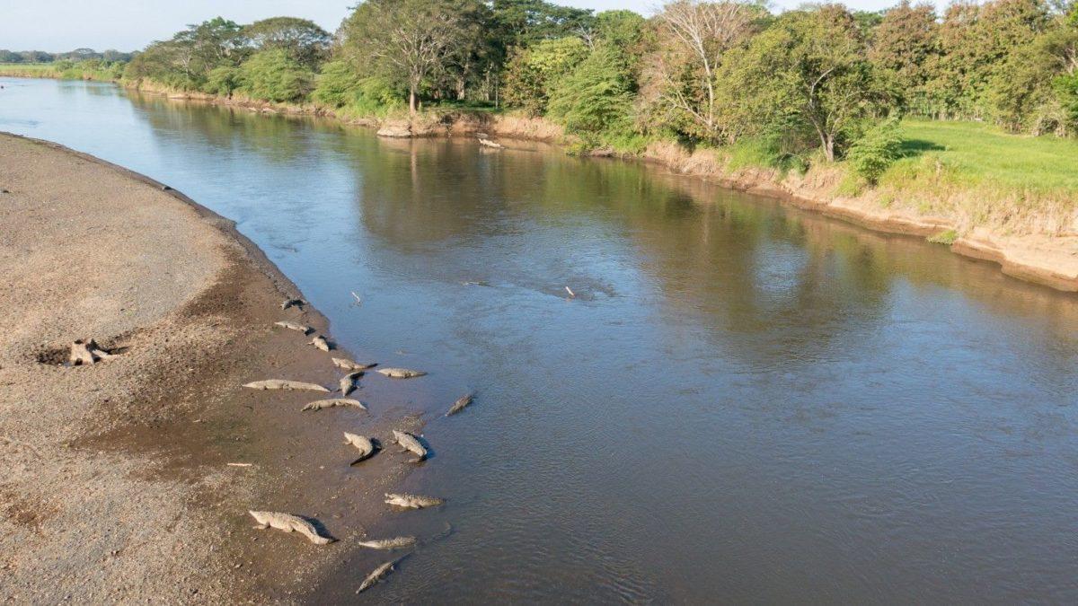 Río Tárcoles en su esplendor