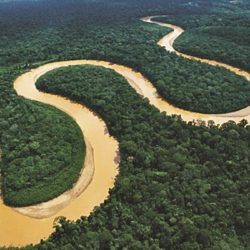 Amazonian River: History, Origin, Characteristics, Depth and Much More