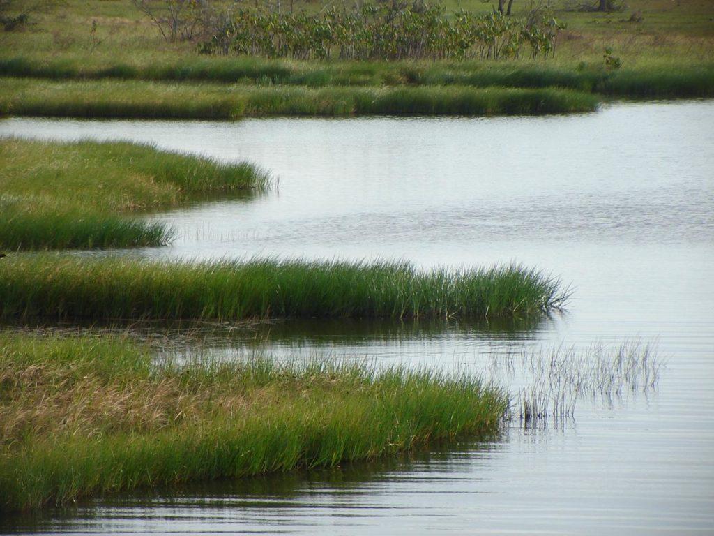 río guárico