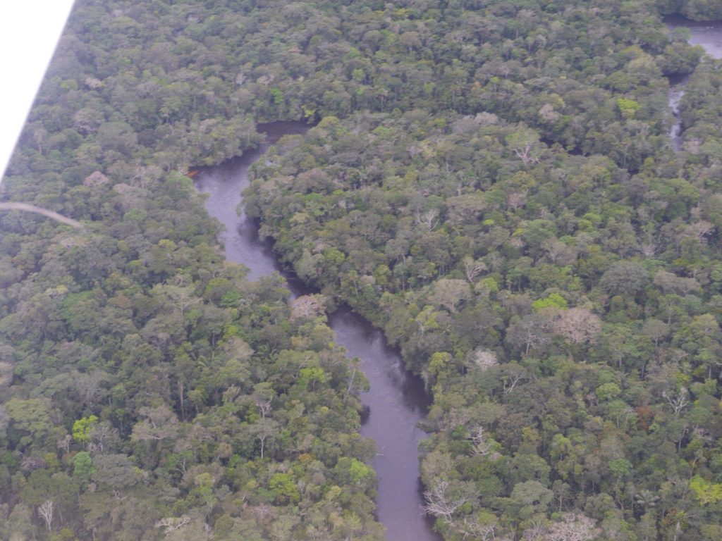bosque del rio roosevelt