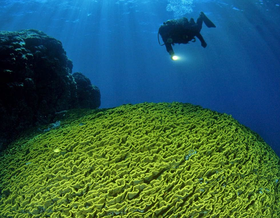 Isla Nueva Caledonia